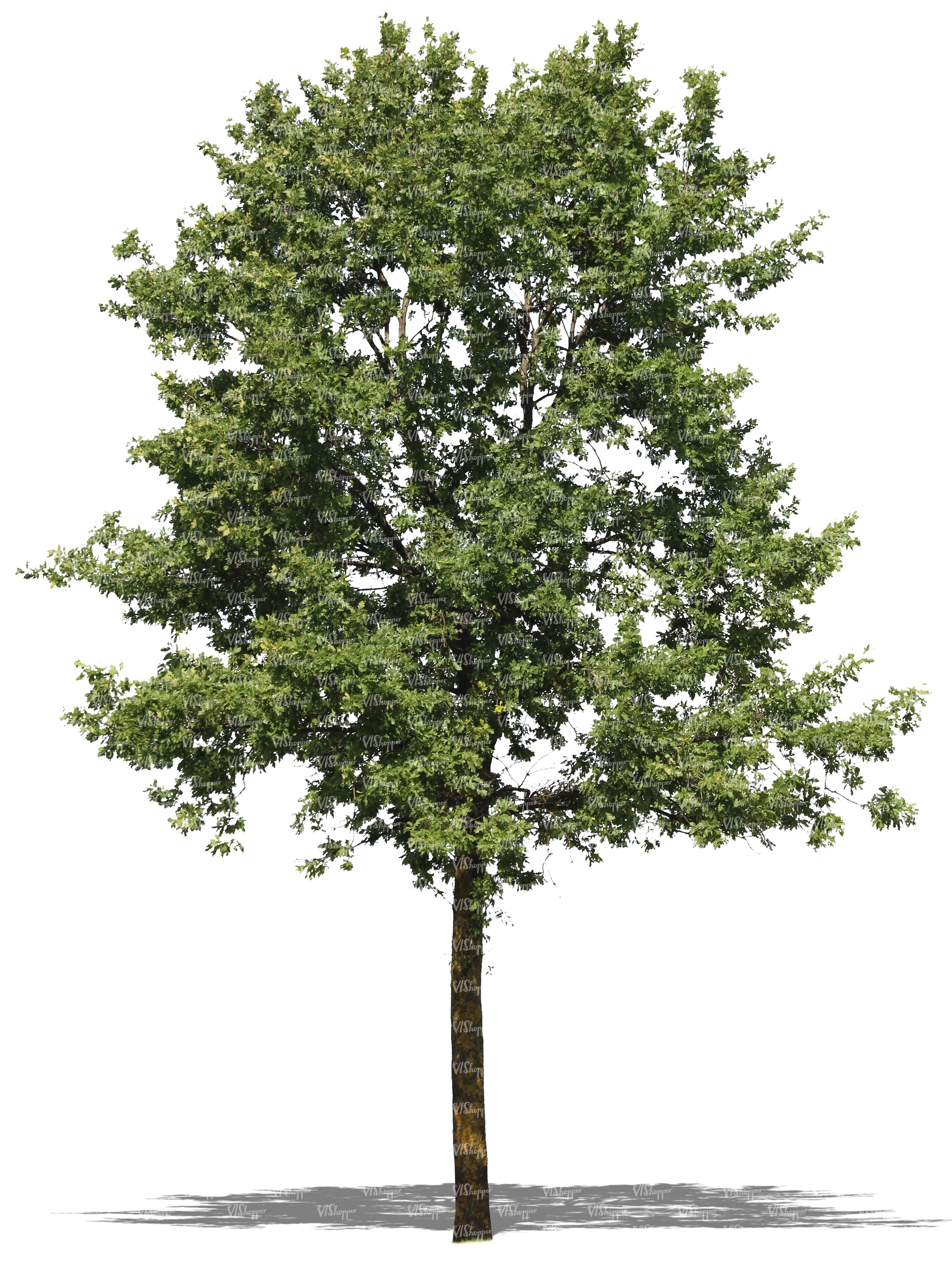 Tree Cutout Related Keywords & Suggestions - Tree Cutout Long Tail ...